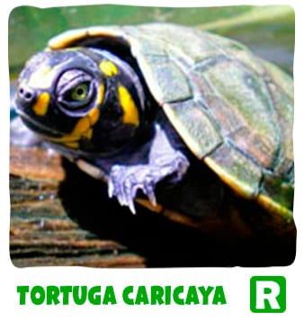 Taricaya