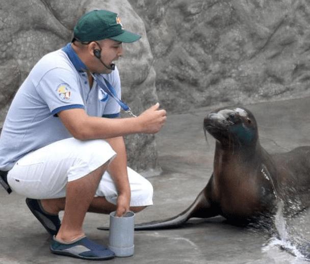 'Nayra', la lobita de mar que se roba el cariño del público