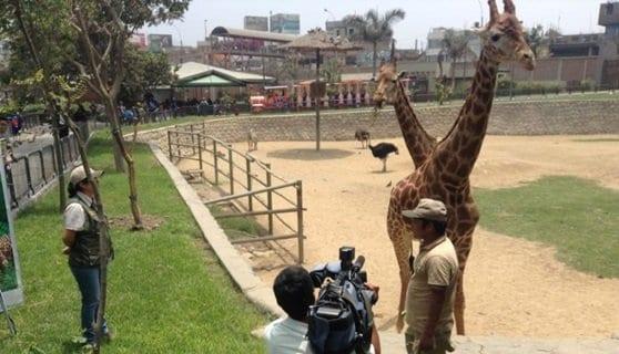 """Animales del Zoo Huachipa compiten por el premio """"Garra de Oro"""""""