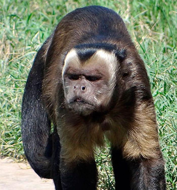 MamÍferos | Zoo Huachipa
