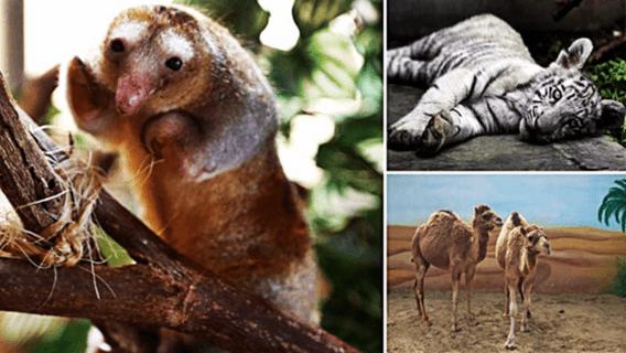 """Zoo Huachipa busca concientizar sobre la conservación con sus """"Joyas de la Naturaleza"""""""