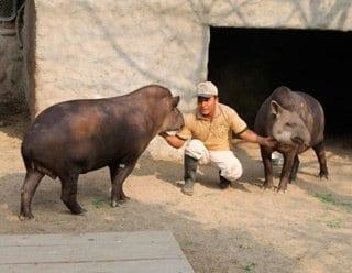 Zoo Huachipa presenta a las nuevas madres