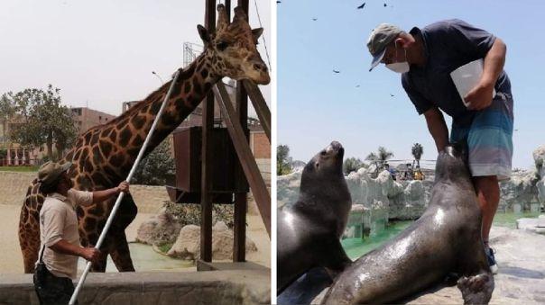 Zoológico de Huachipa inició tours virtuales para conocer de cerca a sus especies emblemáticas